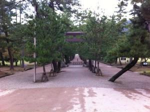 松並木の参道(出雲大社)