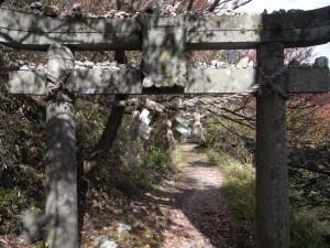 普賢神社の鳥居