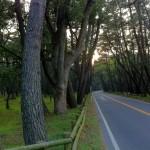 [自転車旅行] 2012/11/08:福岡県福岡市~佐賀県唐津市(ネカフェ)